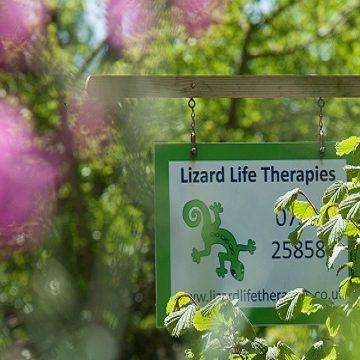 Lizard Life Therapies