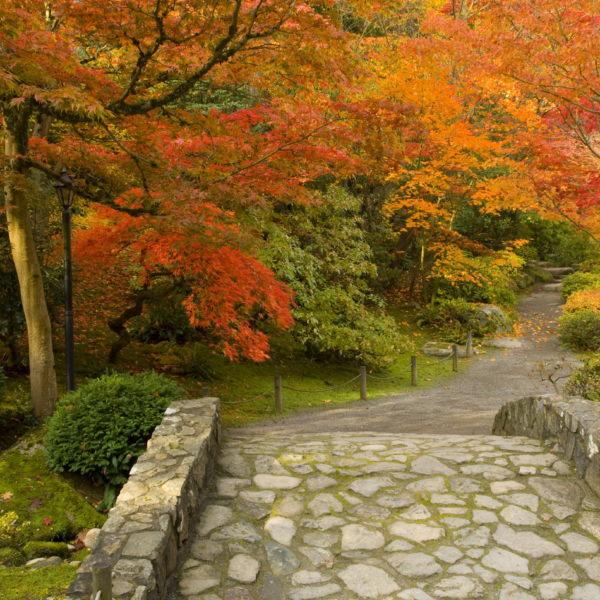lanscape of japanese garden