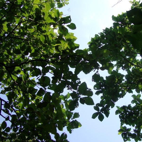 Satori Integrative Therapy – Surabhi Chaturvedi (MBACP)