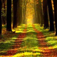 forest-ga86e00fc6_1920-2.jpg
